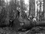 Asian woods crew, Nehalem Timber & Logging Company, Scappoose, ca. 1922
