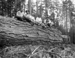 Asian woods crew seated on large log, Nehalem Timber & Logging Company, Scappoose, ca. 1922
