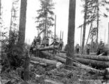 Yarding out, Noyes & Holland Logging Company, Kerry, ca. 1915-1939