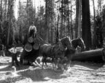 Crew loading with horses, Potlatch Forests Incorporated, Idaho, ca. 1935