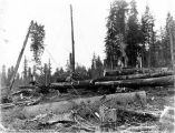 Loading logs with gin pole and donkey engine, unidentified logging operation,  Washington, n.d.