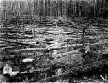Fallen timber and debris, Washington, 1923