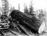 Fir log balanced on landing slip, Washington, 1906