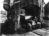 Darius Kinsey and his automobile at an arch in a  red cedar stump, Washington, 1920
