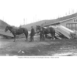 Men with horses in harness at McCormick Lumber Company mill, n.d.
