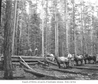 Logging crew yarding poles with horse teams, Phoenix Logging Co., Potlatch, ca. 1919