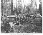Logging crew, horse team, and Master truck and trailer with logs, Coal Creek Lumber Co., ca. 1921