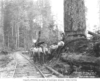 Choker setters beside railroad tracks, with donkey engine in background, Ostrander Railway and...