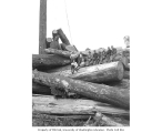 Logging crew on cold deck, Schafer Brothers Logging Company, n.d.