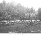 Crew and horse grading teams for railroad right-of-way construction, ca. 1918