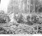 Loggers beside 12-foot diameter spruce tree stump, North River, Grays Harbor County, ca. 1918
