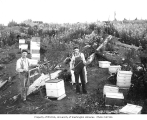Logger Archie Adams (left) with beehives at camp no. 5, Simpson Logging Company, ca. 1940
