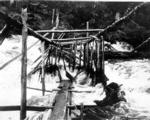 Fish trap in Tamgas Stream, Annette Island, Alaska, July 26, 1910