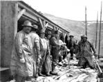 Fishermen ready to begin dressing codfish, Pirate Cove, Popof Island, Alaska, 1913