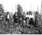Indian hop pickers in White River Valley.