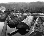 Atlas Lumber and Shingle Co., probably at McMurray, Skagit County, showing mill and log pond.