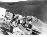 Four men shoveling dirt into rockers at the Albert Cavanaugh Claim, Gold Hill, Yukon Territory,...