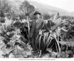 Man, probably Mr. Clark, posing within the tall stalks of rhubarb on his farm, Skagway, ca. 1914