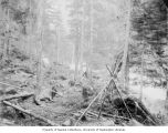 Dead horse next to abandoned campsite on the Chilkoot Trail, ca. 1898