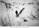 Dog sled with supplies en route to the Scales, Chilkoot Trail, ca. 1898