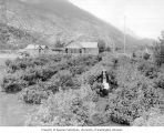 Mrs. Clark and son standing in garden of farm near home, Skagway, ca. 1914