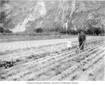 Mr. Clark using wheel cultivator on his farm as his daughter watches, Skagway, ca. 1914