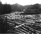 Logs in boom below mill at Toledo, Oregon, along line of U. S. Army Signal Corps, Spruce...