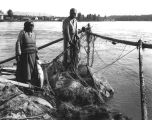 Indians catching salmon in gill nets, probably in British Columbia.