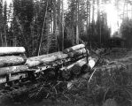 Loading logs at Camp 1, McDougal and Biladeau Logging Co., Ravensdale.
