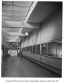 Normandy School interior showing hallway, Normandy Park, 1954