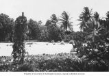 Recreation area created in 1946 used for recreation parties during the resurvey, Bikini Island,...