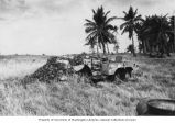 Weapons carrier overgrown with vegetation on Bikini Island, summer 1949