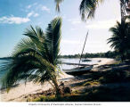 Boats and palms on a beach, probably on Rongelap Atoll, summer 1964