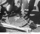 Fish caught for sampling displayed on the deck of a ship, Bikini Atoll, summer 1947