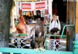 Eagle at a grocery store in Samarkand