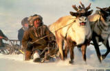 Sledding by reindeer