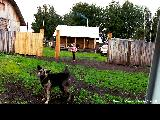 Dog in front of a farm house near Zheleznogorsk