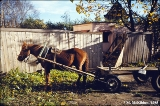 Horse-drawn cart in the city of Novgorod