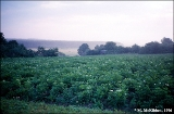 Potato fields on the Desna River in the village of Snopot