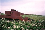 Rusting Soviet tank from the Soviet invasion of Shumshu Island near the end of World War II