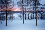 Sunrise in a winter forest near Tartu