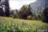 Wild flowers in a valley in the Pamir Mountains in Kyrgyzstan