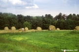 Traditional haystacks on a Lithuanian farm