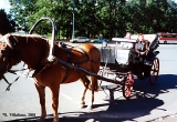 Horse and carriage on a Saint Petersburg street