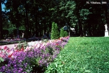 Flower bed in the Peterhof gardens