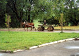 Driving  a horse cart in Orel