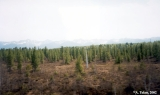 Forest in the Buryat Republic