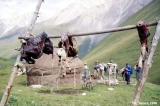 Skinned sheep and a yurt in the Ashu-Tor Valley