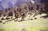 Meadow in the Orta Chashma Valley