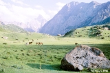 Horses grazing in the Aksu Valley